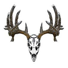 Whitetail Deer Skull Posters & Prints