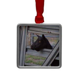Black alpine goat doe waiting at metal gate christmas tree ornaments