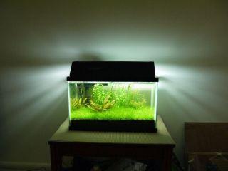 Dwarf Hairgrass Live Aquarium Plant Tank Break Down Sale