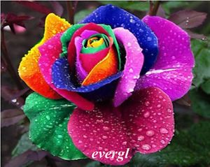 Z 60pcs RARE Rainbow Rose Flower Seeds Your Lover Multi Color Plants Home Garden