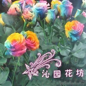 20 x Rose Flower Seeds Multicolour Rose Seeds Plants Flowers Grow Roses Seeds