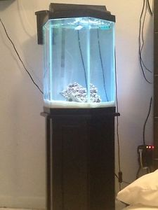 20 gallon hexagon fish tank 20 gallon hexagon tank