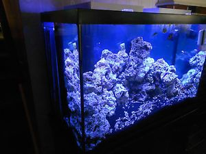 54 gallon corner fish tank for 65 gallon fish tank
