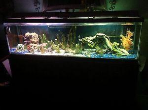 55 gallon fish tank top fin 55 gallon starter kit for 125 gallon fish tank stand