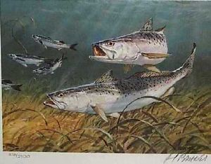 1987 Texas Saltwater Print Al Barnes Speckled Trout Signed and Numbered