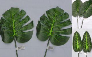 Vivarium Plants Reptile Praying Mantis Large Tropical Leaf Twin Pack