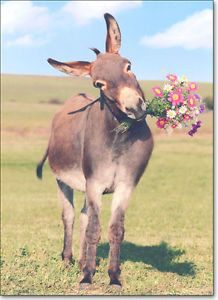 Donkey w Flowers Belated Birthday Card Greeting Card by Avanti Press