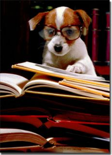 Puppy with Books Funny Graduation Card Greeting Card by Avanti Press