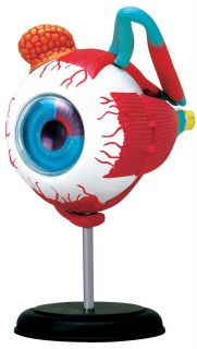 Human Eyeball Anatomy Model Puzzle 4D Kit 26054 Tedco Science Toys