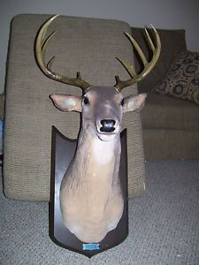 "Animated Singing Talking Moving ""Buck"" Deer Wall Mount"