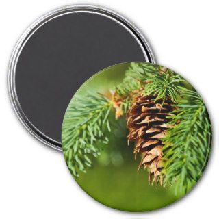 Christmas Evergreen Pine Cone Needles Tree Trees Magnets